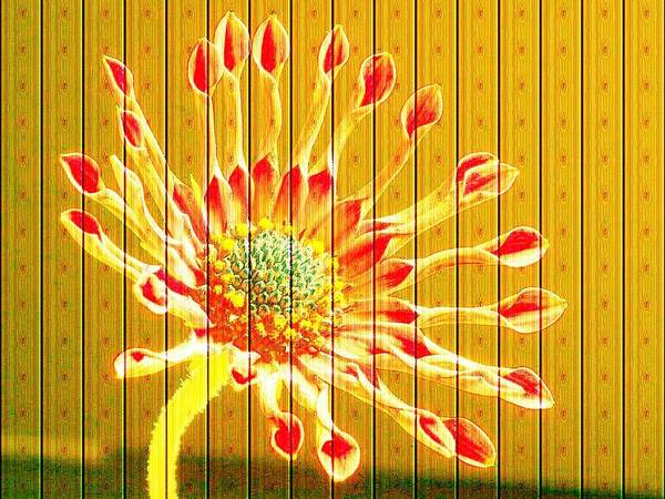 Flower Poster featuring the photograph Wall Flower by Tim Allen