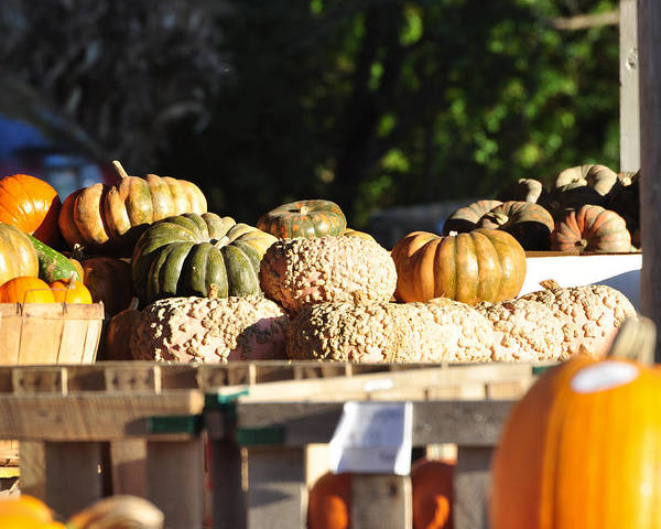 Still Life Poster featuring the photograph Wart Pumpkins by Jan Amiss Photography