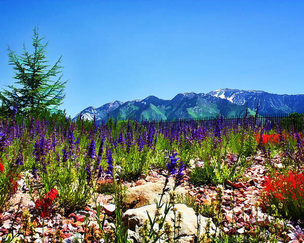 Wasatch Mountains Poster featuring the photograph Wasatch Mountains In Spring by Tracie Kaska