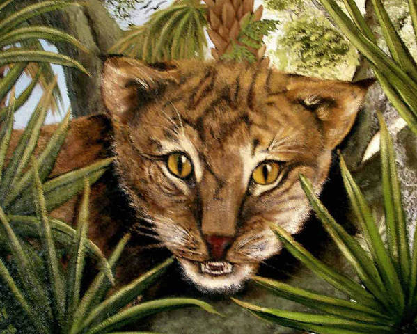 Bobcat Poster featuring the painting Watching Floridabobcat by Darlene Green