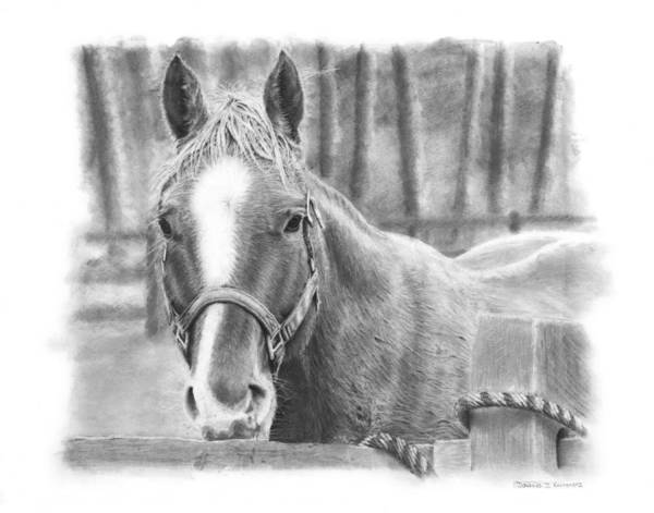 Horse Poster featuring the drawing Watching You by Douglas Kochanski