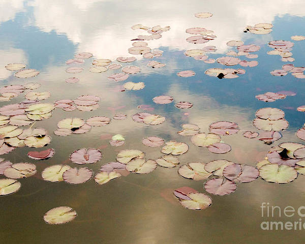 Nature Poster featuring the photograph Water Lilies In Schoenbrunn Vienna Austria by Julia Hiebaum