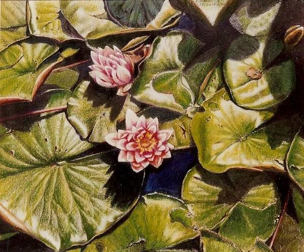 Pink Poster featuring the painting Water Lilies On The Ringdijk by Constance Drescher