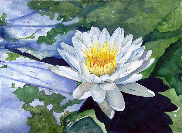 Flower Poster featuring the painting Water Lily by Sam Sidders