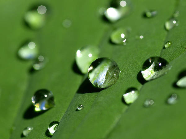 Dew Poster featuring the photograph Waterdrops by Melanie Viola