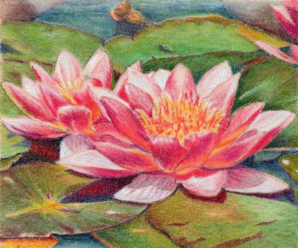 Waterlillies Poster featuring the painting Waterlillies by Robynne Hardison