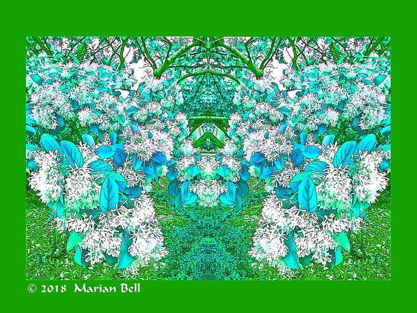 Photography Poster featuring the digital art Waxleaf Privet Blooms In Aqua Hue Abstract With Green Frame by Marian Bell