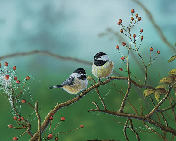 Chickadees Poster featuring the painting Web Chickadees by Anthony J Padgett