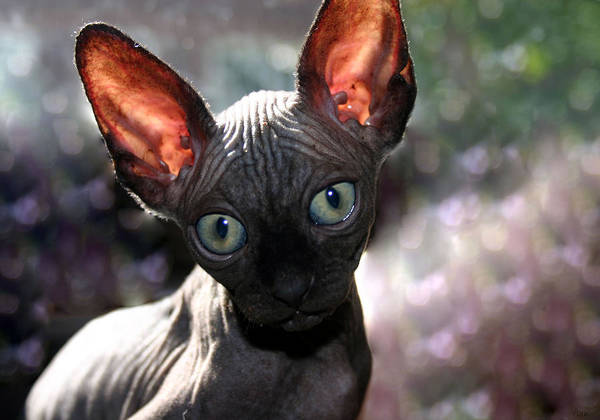 Cat Poster featuring the photograph Wee Little Kitten by Ruben Flanagan