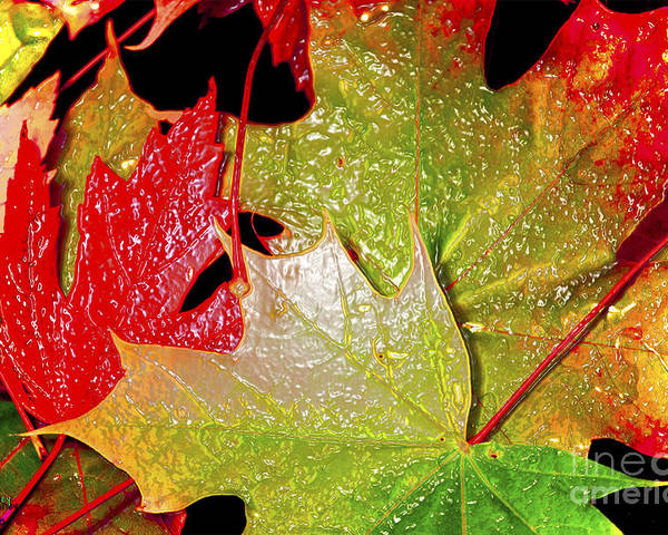 Leaves Poster featuring the photograph Wet Leaves Of Fall by Larry Keahey