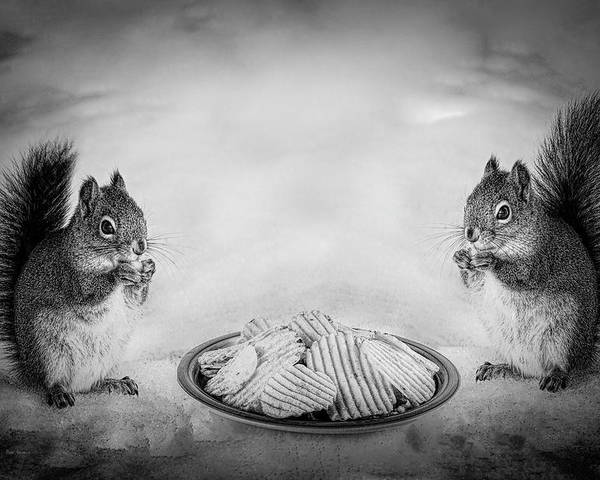 Red Squirrels Poster featuring the photograph When You Lose Your Nuts There Is Always Chips by Bob Orsillo