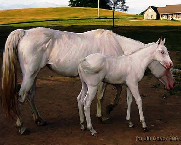 White Horses Poster featuring the painting White Baby Horse by Jill Baker