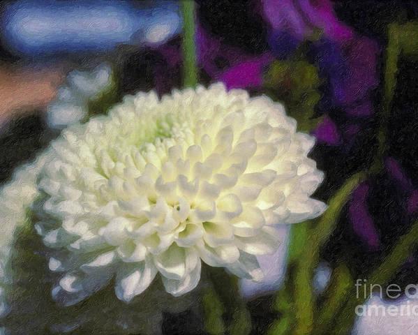 White Chrysanthemum Flower Beautiful Mum Poster featuring the photograph White Chrysanthemum Flower by David Zanzinger