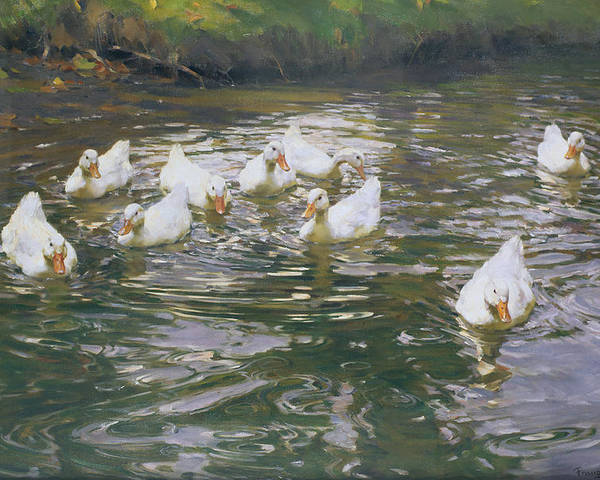 White Ducks On Water Poster featuring the painting White Ducks On Water by Franz Grassel