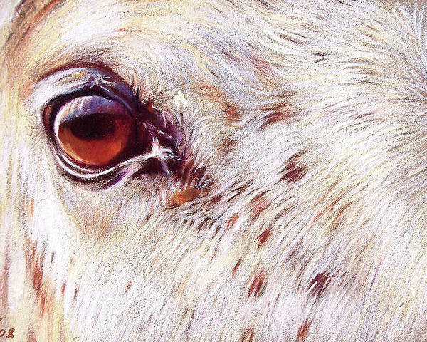 Horse Animal Equine Portrait Drawing Poster featuring the drawing White Horse Close-up by Elena Kolotusha