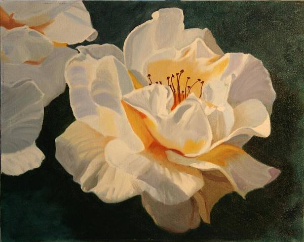 Floral Poster featuring the painting White Rose by Robert Tower