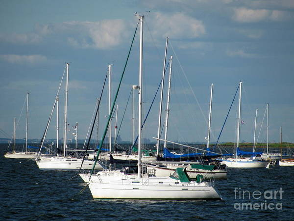 Sailboats Poster featuring the photograph White Sailboats by Colleen Kammerer