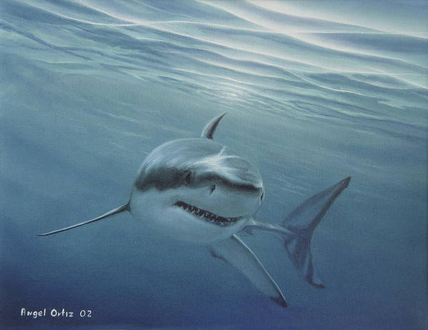Shark Poster featuring the painting White Shark by Angel Ortiz