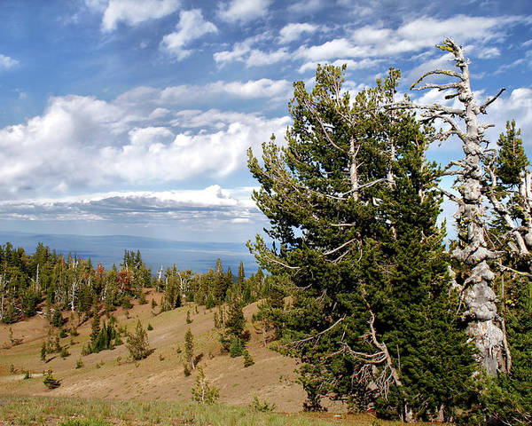 Pines Poster featuring the photograph Whitebark Pine Trees Overlooking Crater Lake - Oregon by Christine Till