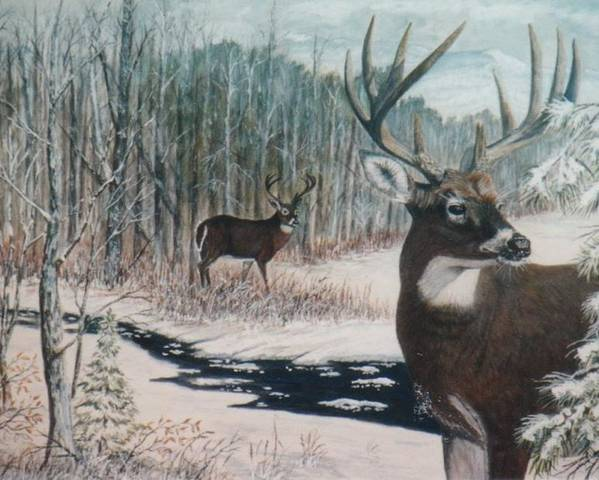 Deer; Snow; Creek Poster featuring the painting Whitetail Deer by Ben Kiger