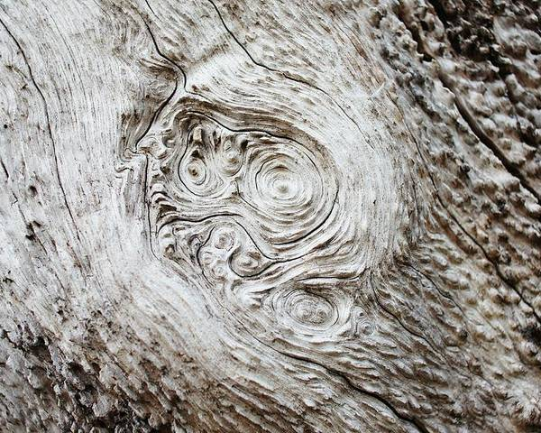 Whorl Poster featuring the photograph Whorly Wood by Lynda Dawson-Youngclaus