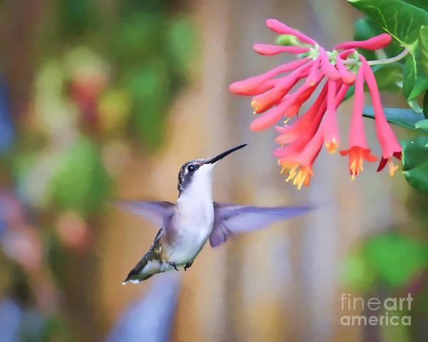 Hummingbird Poster featuring the photograph Wild Birds - Hummingbird Art by Kerri Farley