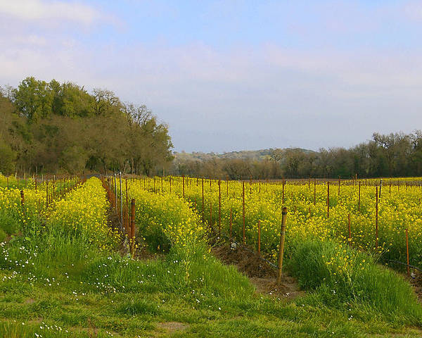 Mustard Poster featuring the photograph Wild Mustard Fields by Tom Reynen