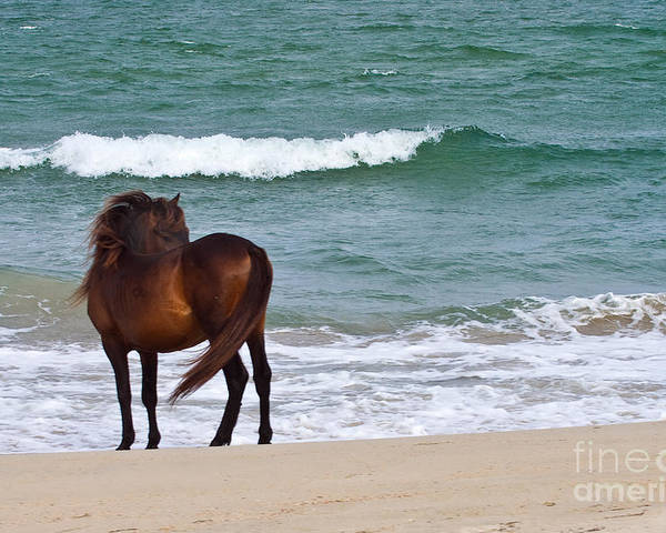 Wild Horses Poster featuring the photograph Wild Solitude by Crystal Garner