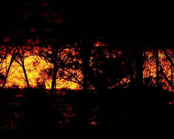 Landscape Poster featuring the photograph Wildfire by Tai Clay
