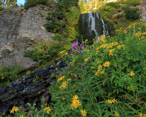 Wildflowers Poster featuring the photograph Wildflowers At Vidae Falls by Hollie Adams