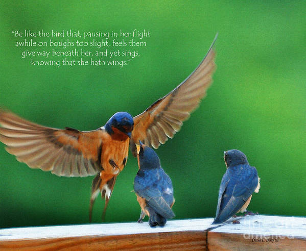 Diane Berry Poster featuring the painting Wings by Diane E Berry