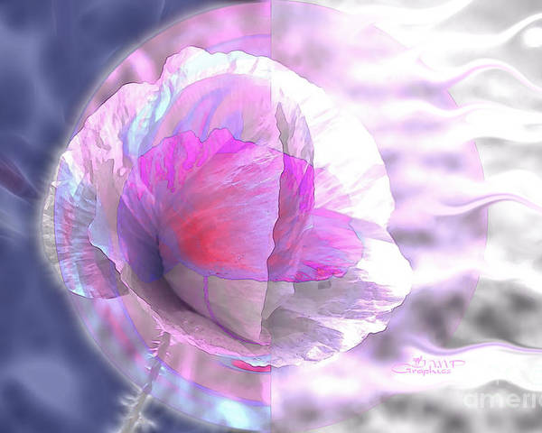 Flower Poster featuring the photograph Winter Blossom by Jutta Maria Pusl