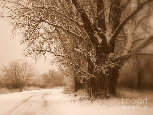 Prosser Poster featuring the photograph Winter Dream by Carol Groenen