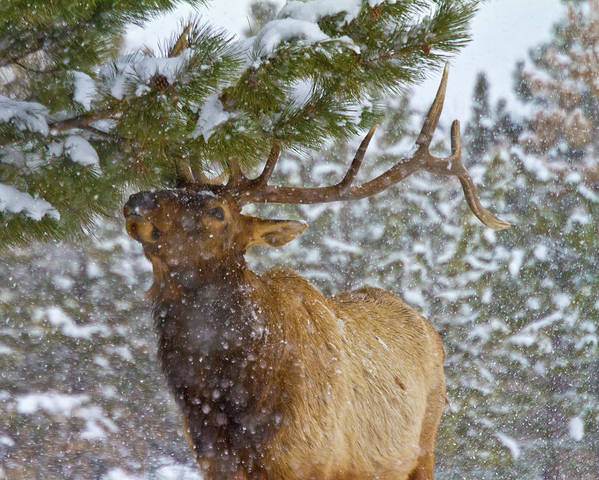 Animal Poster featuring the photograph Winter Edibles by Crystal Garner