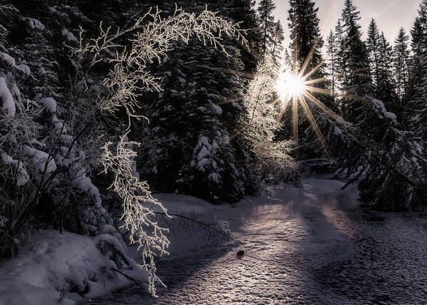 Winter Poster featuring the photograph Winter Evening by Tammy Lauritsen
