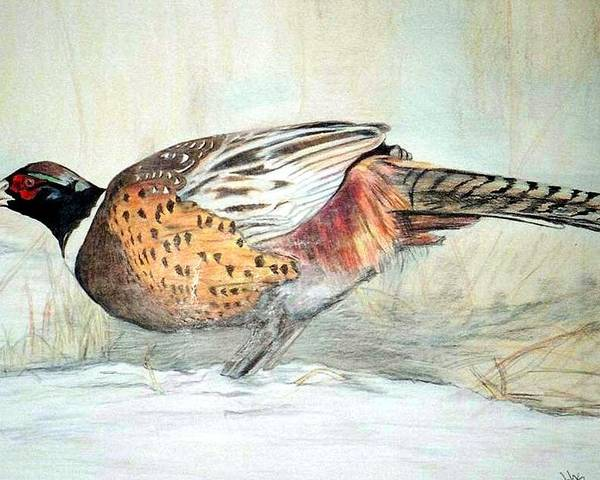 Ringneck Pheasant Poster featuring the painting Winter Ringneck by Debra Sandstrom