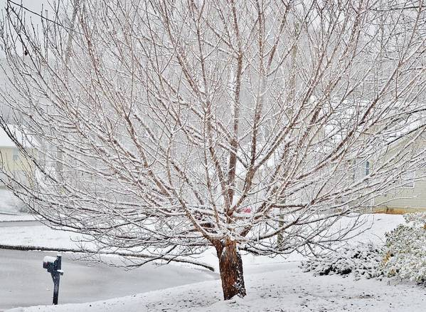 Snow Poster featuring the photograph Winter Tree by Eileen Brymer
