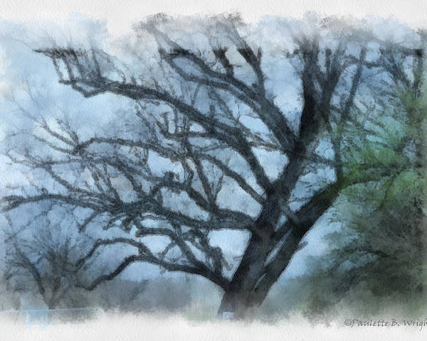 Texas Poster featuring the photograph Winter Tree by Paulette B Wright
