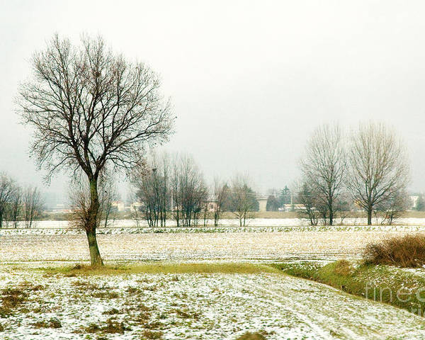Bare Poster featuring the photograph Winter Trees by Silvia Ganora