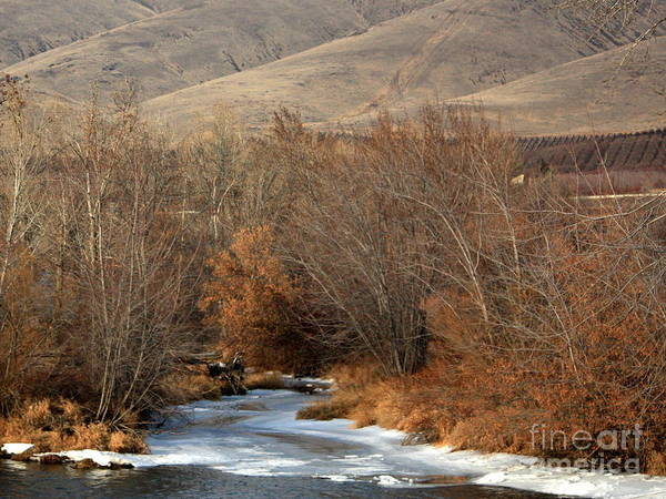 Yakima Poster featuring the photograph Winter Yakima River With Hills And Orchard by Carol Groenen