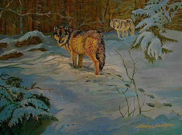 Wolves Poster featuring the painting Wolves Of Maine by Alan Carlson