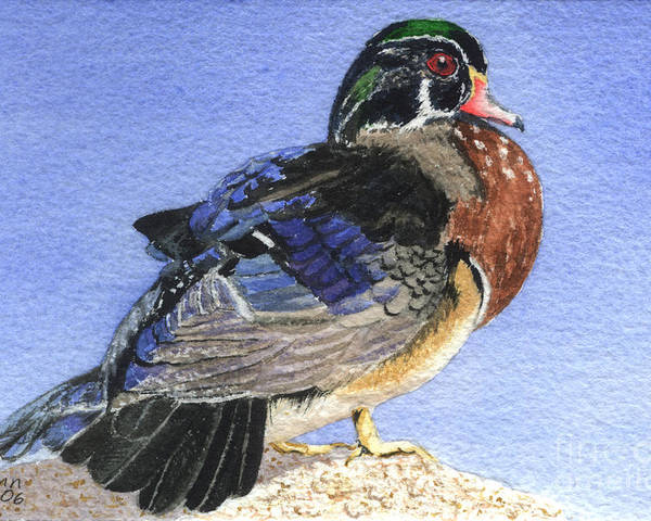 Duck Poster featuring the painting Wood Duck by Lynn Quinn