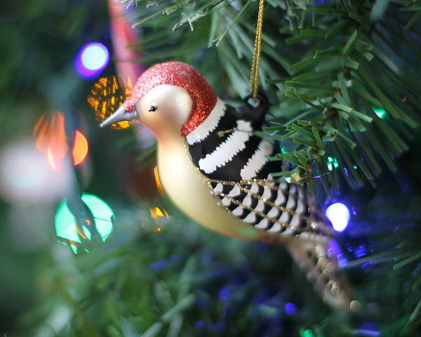 Woodpecker Poster featuring the photograph Woodpecker Ornament by Rebecca Pavelka