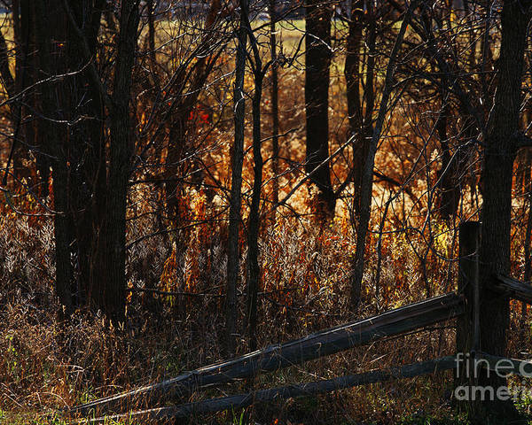 Michigan Poster featuring the photograph Woods - 1 by Linda Shafer