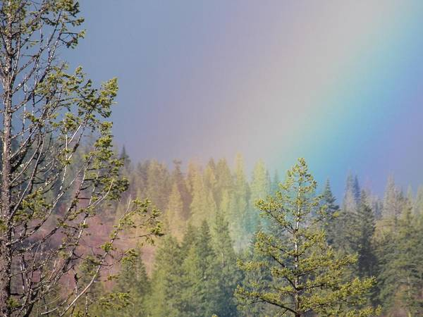 Rainbow. Poster featuring the photograph Words No Good Here by Debbi Saccomanno Chan