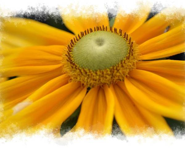 Yellow Poster featuring the photograph Yellow Flower by Donna Bentley