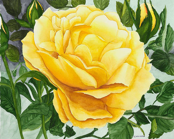 Yellow Rose Watercolor Painting Poster featuring the painting Yellow Rose by Robert Thomaston