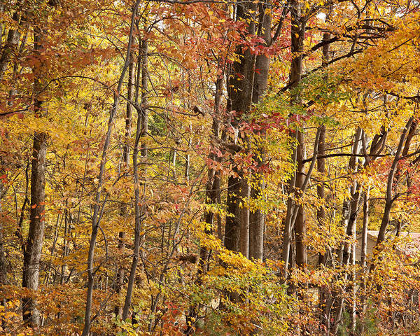 Autumn Poster featuring the photograph Yellow Study by Dennis Ludlow