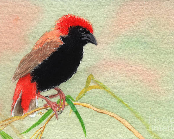 Bird Poster featuring the painting Zanzibar Red Bishop by Lynn Quinn