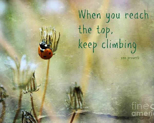 Lady Bug Poster featuring the photograph Zen Proverb by Clare Bevan